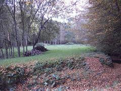 stères de bois dans la clairière en automne