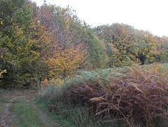 chemin dans les bois en automne