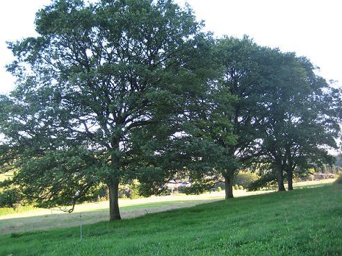 trois chênes en haut de la colline Issancourt gernelle