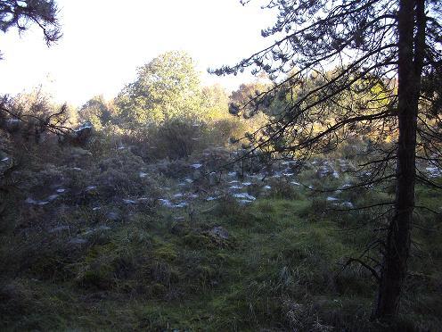 toiles d`araignées dans le petit matin